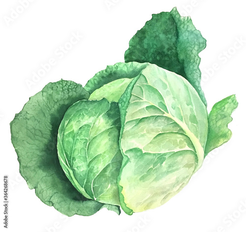 Green cabbage vintage watercolor botanical illustration isolated on a white back Tableau sur Toile