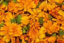 Vibrant Orange Pot Marigold Ca...