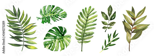 Watercolor hand drawn rainforest tropical leaves botanical illustration set isolated on white background