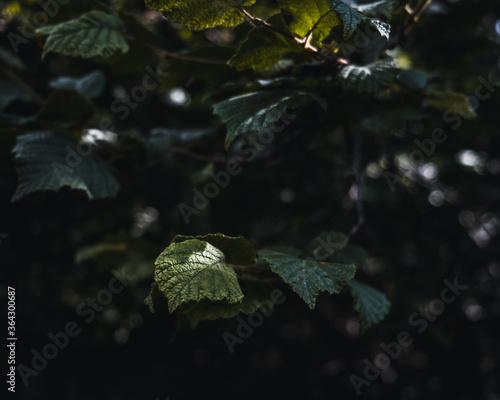 Hojas en la profundidad del bosque