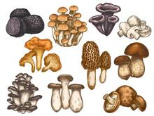 Hand Drawn Mushrooms. Colorful...
