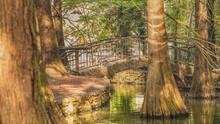 Widok Przedstawia Przepiekny Park Miejski W Ktorym Mozna Spotkac Wiele Gatunkow Dzikich Ptakow Jak I Rzadkie Gatunki Drzew Takich Jak Np. Cypryśnik Błotny (Taxodium Distichum)