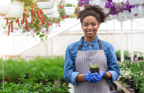 Fototapeta Spring day and work gardener. African american woman holding a pot with seedling on greenhouse background obraz