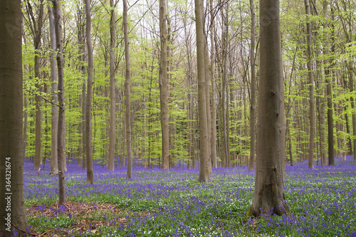 Fototapeta spring in the forest obraz
