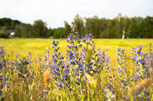 Fototapeta zieleń miejska, piękne kolorowe kwiaty obraz