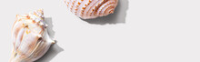 Summer Concept With Seashells ...
