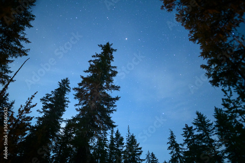 Night Sky With Stars Planets and Silhouetted Trees