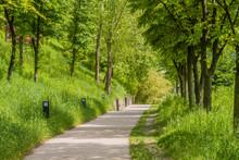 Walking Path In Wooded Public ...