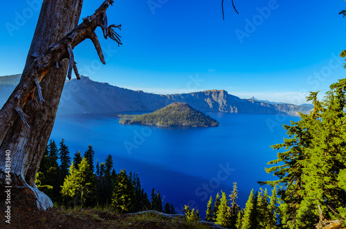 Fototapeta Dead Tree Overlooking Crater Lake National Park obraz