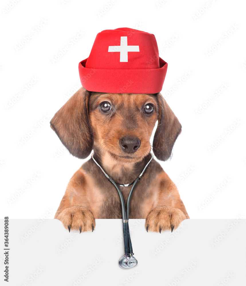 Dachshund puppy dressed like a doctor with medical hat and stethoscope looks above white banner. isolated on white background. Empty space for text