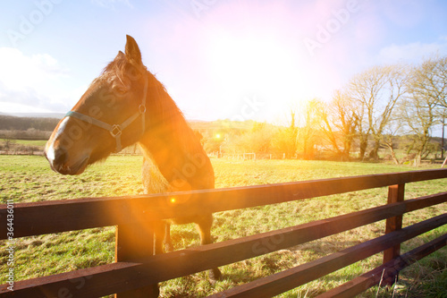 Fototapeta Horse behind fence looking at camera obraz