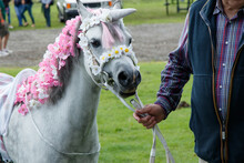 White Pony Decorated As A Unic...