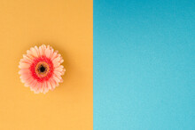 Gerbera Flower On Colored Text...