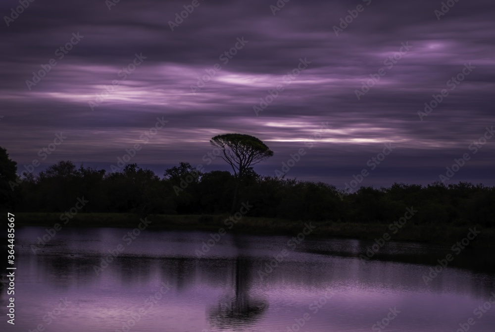 Reflection of trees and purple sky on the lake during sunset