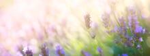 Summer Floral Landscape; Beaut...
