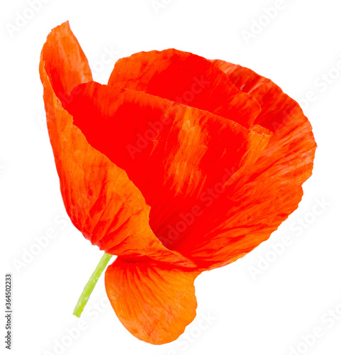 poppy flower isolated on a white backgroud Canvas-taulu