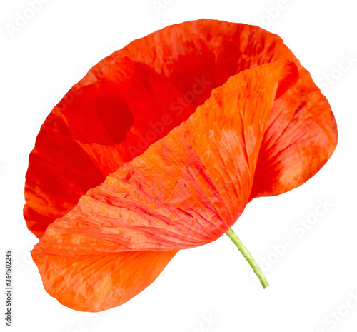 poppy flower isolated on a white backgroud Canvas Print
