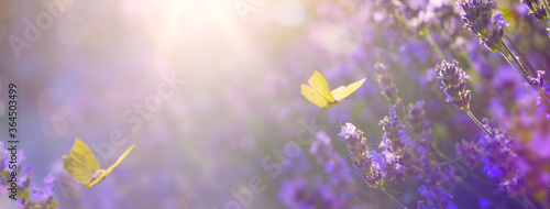 Obraz Art Summer floral landscape; beautiful summer lavender flower and fly butterfly against evening sunny sky; nature landscape background. - fototapety do salonu