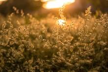 Plants In Sunset, Orange Sun R...