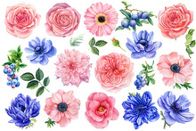 Flowers On A White Background....