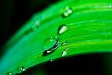 liść i krople wody