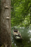 Fototapeta Na sufit - Canoe in peaceful backwater among trees with lichens.