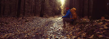 Autumn Camping In The Forest, ...