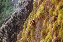 From Above Of Gelada Monkeys S...