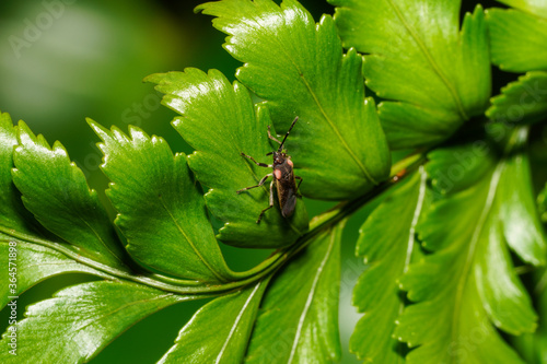 Papel de parede Macro Photography of Nature and Animals