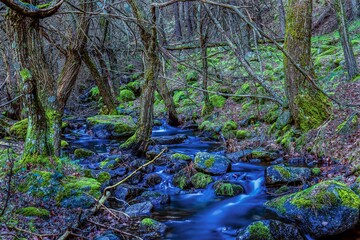 Obraz na Szkle Góry Silk effect photo of river in the forest with trees and rocks