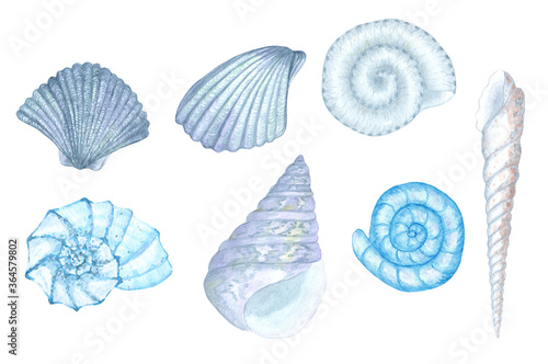 Hand-painted watercolor blue seashell illustrations Canvas-taulu