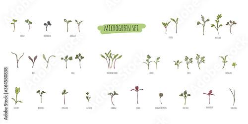 Big vector set of microgreens Fotobehang
