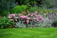 Flowers In The Garden, Botanis...