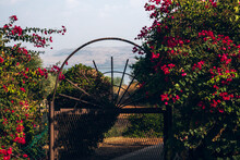 Iron Door With Red Flowers, Galilee Israel.