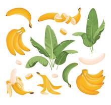 Banana Vector Illustrations Set. Exotic Bundle Of Banana Fruits: Bunches, Palm Tree Leaves. Ripe Bunch Bananas, Fruits Snack