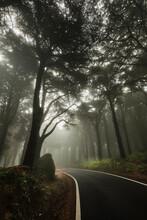 A Estrada De Nevoeiro