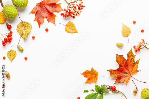 Fototapeta Autumn composition made of leaves, berries on white background. Autumn concept for Thanksgiving day or for other holidays. Flat lay, copy space. obraz