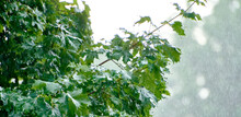 Nature Fresh Green Leaf Branch...
