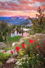 Fototapeta Góry Summer sunset with wildflowers in the Wasatch Mountains, Utah, USA.
