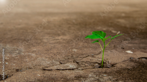 Canvastavla Ecology concepts The seedlings sprout on the cracked cement floor