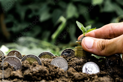 Fototapeta Hand holding plant on coins with copy space obraz