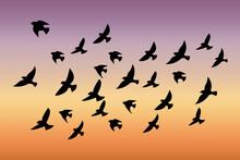 A Flock Of Birds At Sunset. Ve...