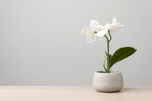 Isolated Artificial Potted Flo...