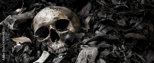 Canvas Print The skull and pile of bone on decay leaf in pit the old graveyard