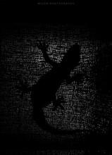 Silhouette Of Lizard.