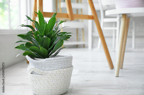 Canvastavla Wicker baskets with houseplant in room