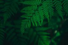 Green Fern Leaf As A Close-up ...