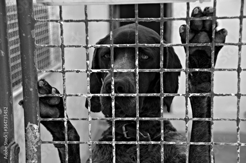 Papel de parede Perro abandonado en una perrera
