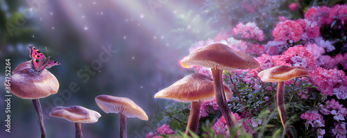 Obraz na płótnie Magical fantasy mushrooms in enchanted fairy tale dreamy elf forest with fabulou