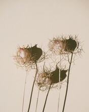 Dried Flowers On Beige Background With Harsh Shadow, Minimalistic Style